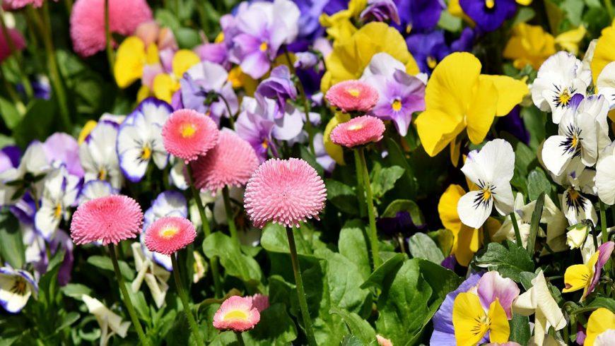 Flores: La alternativa a los pesticidas químicos